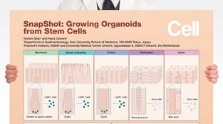 0977-01-02_Growing_Organoids_from_Stem_Cells.jpg