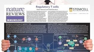 0977-03-07_Regulatory_T_Cells.jpg