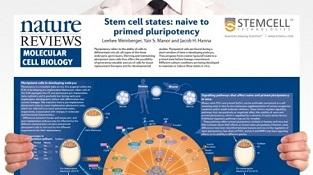 0977_02-01E_Stem_Cell_States-Naive_to_Primed_Pluripotency.jpg