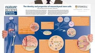 0977_02-03C_The_Identity_and_Properties_of_MSCs.jpg