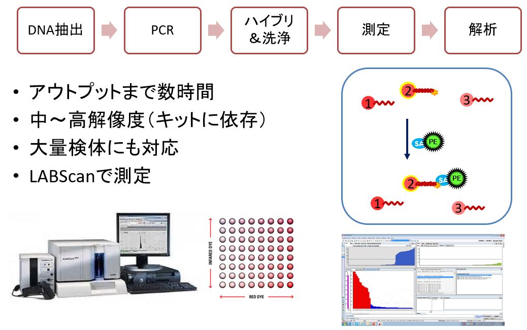 HLA(ヒト白血球型抗原)技術情報用語集PCR-SSO法HLA MENU株式会社ベリタス